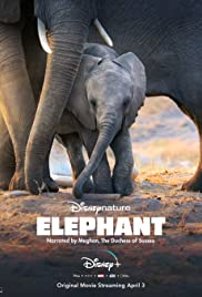 Elephant soundtrack